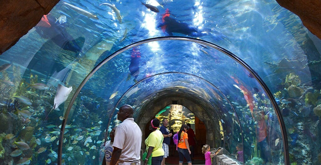 Mayan-Reef-Aquarium-of-the-Americas